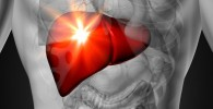 Liver Function and Health