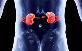 Four Ways To Improve Kidney Function