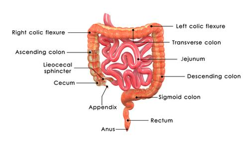 The Appendix: It\'s More Important Than You Think