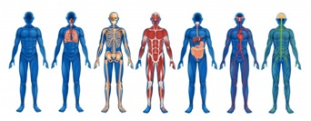 Osteopathy benefits many body systems