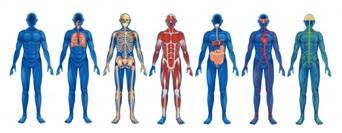 Osteopathy benefits many body systems